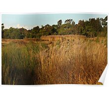 Dry Wetlands Poster