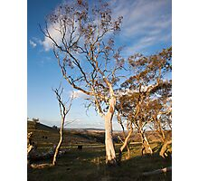 Cattle Country Photographic Print