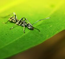 I am Ant by Jennifer Lam
