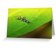 I am Ant Greeting Card