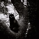 Quiet Observer by Mojca Savicki