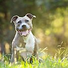 Happy Smiley Trixie Dog by ruthlessphotos