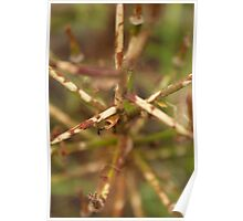 Abstract brown plant stalks Poster
