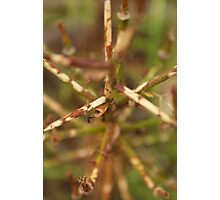 Abstract brown plant stalks Photographic Print