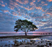 Pastel Sunrise by Ryan O'Donoghue