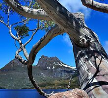 Cradle Mountain through the Tree by Ian Berry