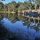 Lake Parramatta by Ian Berry