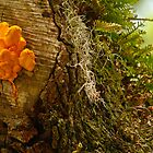 sulfur mushroom on old oak by Manon Boily