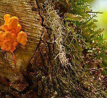 sulfur mushroom on old oak by Manon Boily