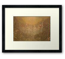 Summer meadow basking in red light Framed Print