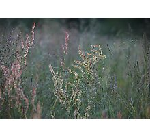 Glowing sorrel Photographic Print