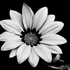 Black and White Flower by Jonathan Eggers
