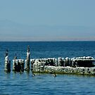 Salton Sea by Vicki Pelham