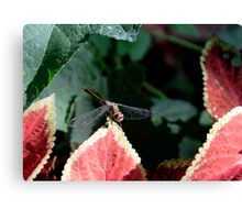 Dragonfly & Colius Canvas Print