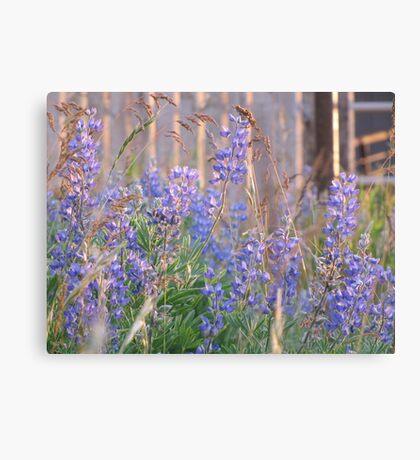 Lupin Blue Canvas Print