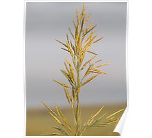 Sky Grass Poster