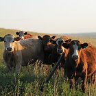 Moo Group by Kathi Arnell