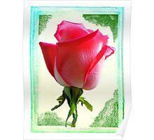 Textured Rosebud Poster