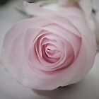 Softly she rose by marajade