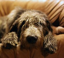 Wet, Muddy, and Lovin My Sofa by JH2011