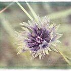 Pretty in Purple by Julesrules