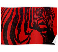 Zebra lino print on red paper Poster