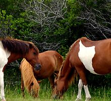 3's company by Chuck Chisler