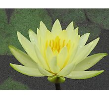 Waterlily after rain Photographic Print