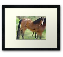 One of my very favorites of the animal kingdom.  Framed Print