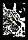 Cats Eye by Vicki Pelham