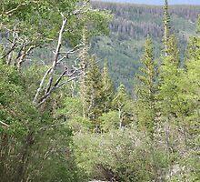 Running Through The Rockies by Dean Mucha