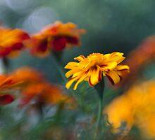 Golden Sun by Kasia-D