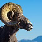 Ram Tough by Jay Ryser