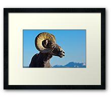 Ram Tough Framed Print
