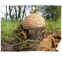 Fungi- Selm Muir Forest Poster