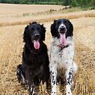 Gundogs - Quinn and Aran - Large Munsterlanders by Sandra O'Connor