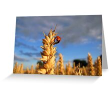 Time To Harvest Greeting Card