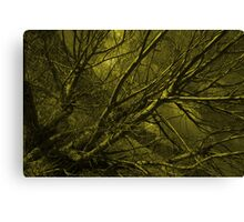 Naked willow  Canvas Print