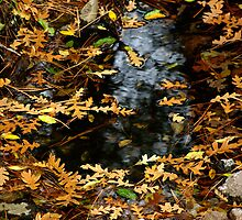 Autumn Leaves by Vicki Pelham