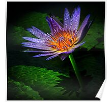 waterlily II Poster