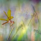 Dance of the Dragonflies by Bonnie T.  Barry