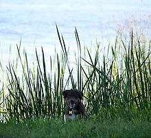 Scout Amongst the Reeds by Dee2west