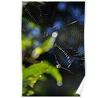 little spider Poster