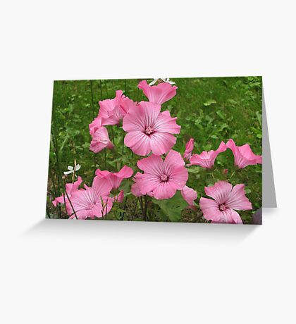 A pink dream Greeting Card