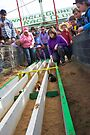 Pinnacle Guinea Pig Races  by Darren Stones