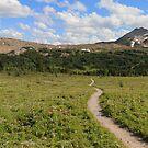 Panoramic meadows II by zumi
