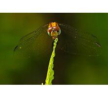 Tiny Dragon Photographic Print