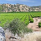 San Joaquin Valley Vineyard by Polly Greathouse