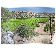 San Joaquin Valley Vineyard Poster