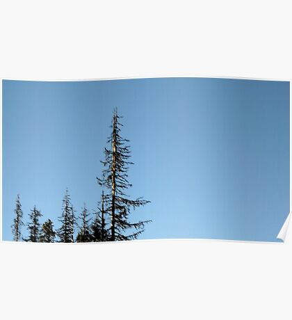 Oregon Sky & Trees Poster
